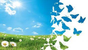 Formación homologada Postgrado en Educación Ambiental: Programas, Actividades y Recursos + Titulación Universitaria