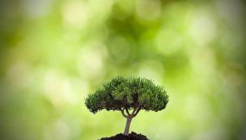 Curso homologado Técnico en Medioambiente + Titulación Propia Universitaria en Gestión y Control de la Contaminación del Medioambiente con 4 Créditos ECTS