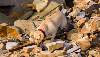 Formación homologada Formación Teórica en Terapia Asistida con Perros para Colectivos de Especial Vulnerabilidad (Reconocimiento de Oficialidad por la Administración Pública – ESSSCAN)