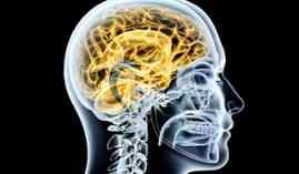 Curso online Técnico en Neurología (Curso Homologado con Titulación Universitaria + 20 Créditos tradicionales LRU)