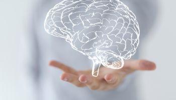 Curso online Experto en Neuropsicología de la Educación para Maestros de Pedagogía Terapéutica (Curso Homologado y Baremable en Oposiciones de Magisterio de Pedagogía Terapéutica + 4 Créditos ECTS)